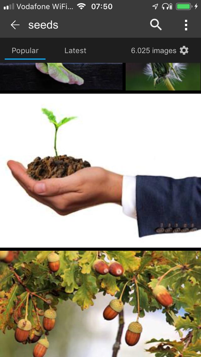 WISDOM: the Seed