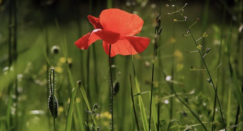Poem Poetry: The Flower