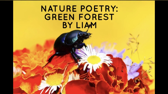 Nature Poetry: Green Forest