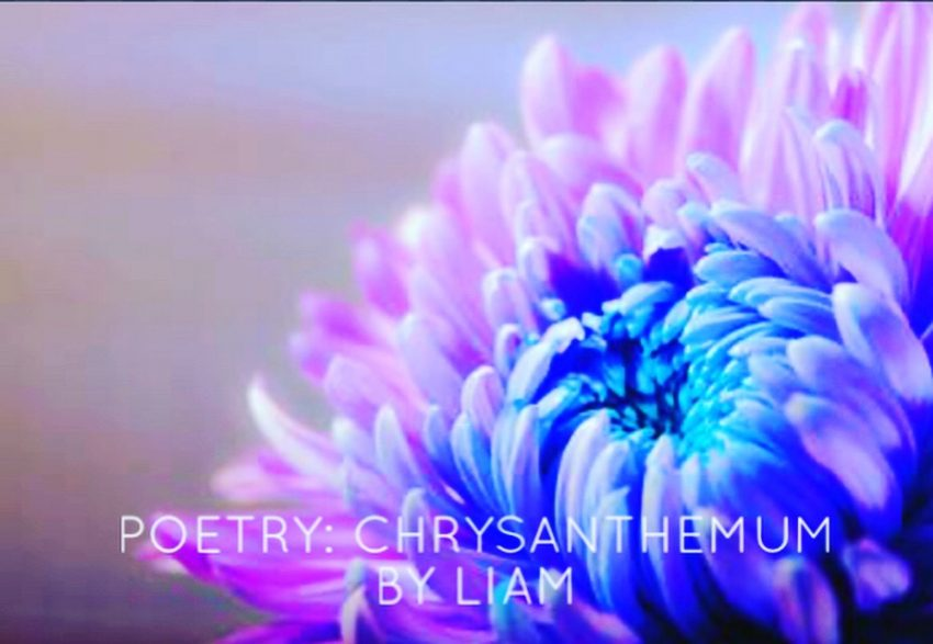 Poetry: Chrysanthemum